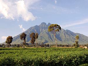 Mount Elgon/Sipi Falls